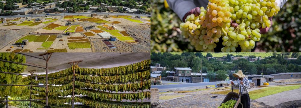 نظام تولید انگور در دره جوزان ملایر به عنوان پنجاه و سومین میراث مهم کشاورزی جهان به ثبت رسید.