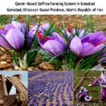 ثبت نظام زراعت زعفران گناباد مبتنی بر قنات در میراث كشاورزی مهم جهانی