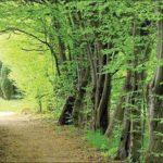 ثبت جهانی جنگلهای هیرکانی به نام ایران  تحت عنوان قدیمی ترین بافت جنگلی کره زمین