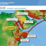 هشدار فائو در خصوص آفت ملخ  صحرائی