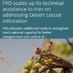 افزایش بودجه پروژه همکاری ایران – فائو  برای کنترل ملخ صحرائی در کشور