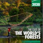 وضعیت جهانی جنگل ها: جنگل ها تنوع زیستی و مردم