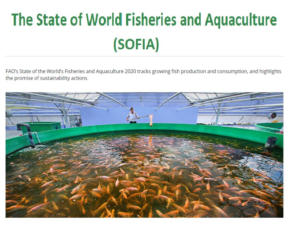 معرفی گزارش وضعیت جهانی شیلات و آبزی پروری SOFIA