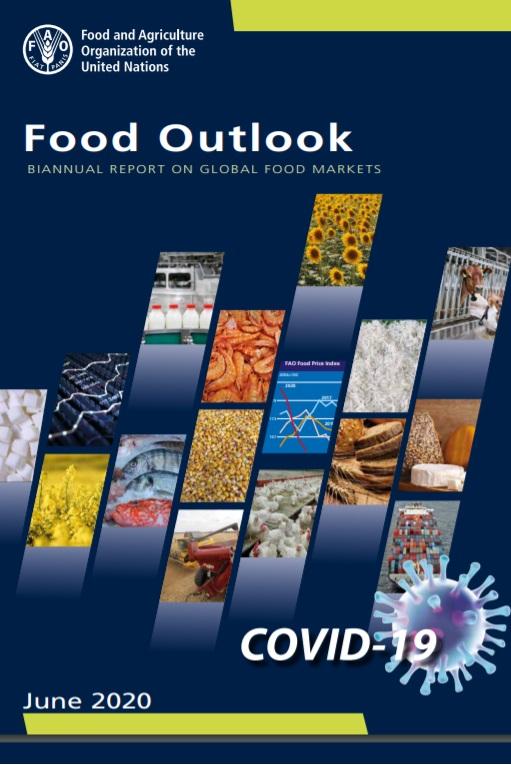 چشم انداز غذا: گزارش شش ماهه بازارهای جهانی غذا